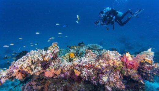 新しいサンゴ礁のモニタリング方法の評価