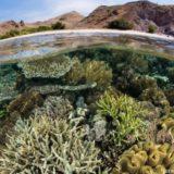 サンゴ礁の水中風景