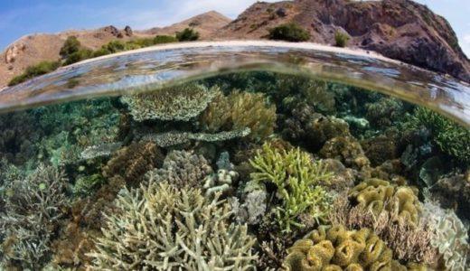 サンゴ礁の海面表層ミクロ層