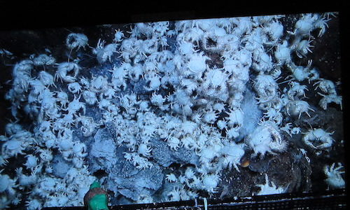 世界初!熱水活動のある深海底に穴をあけたらどうなった?