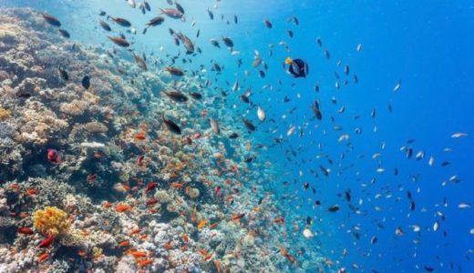 ワタクシのサンゴ礁の研究