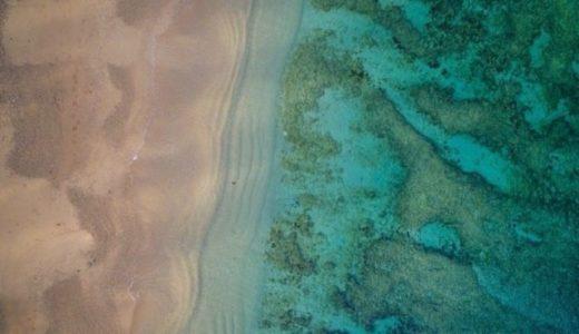 サンゴ礁のことがもっと好きになる本のリスト