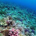 サンゴ礁の動物プランクトンの食物構造