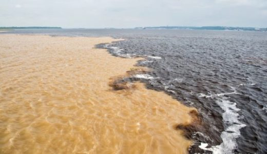 アマゾン河とネグロ河の合流点でたくさん魚が捕れる理由