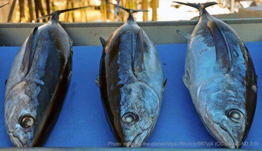 全国漁業協同組合連合会で海プラ講演